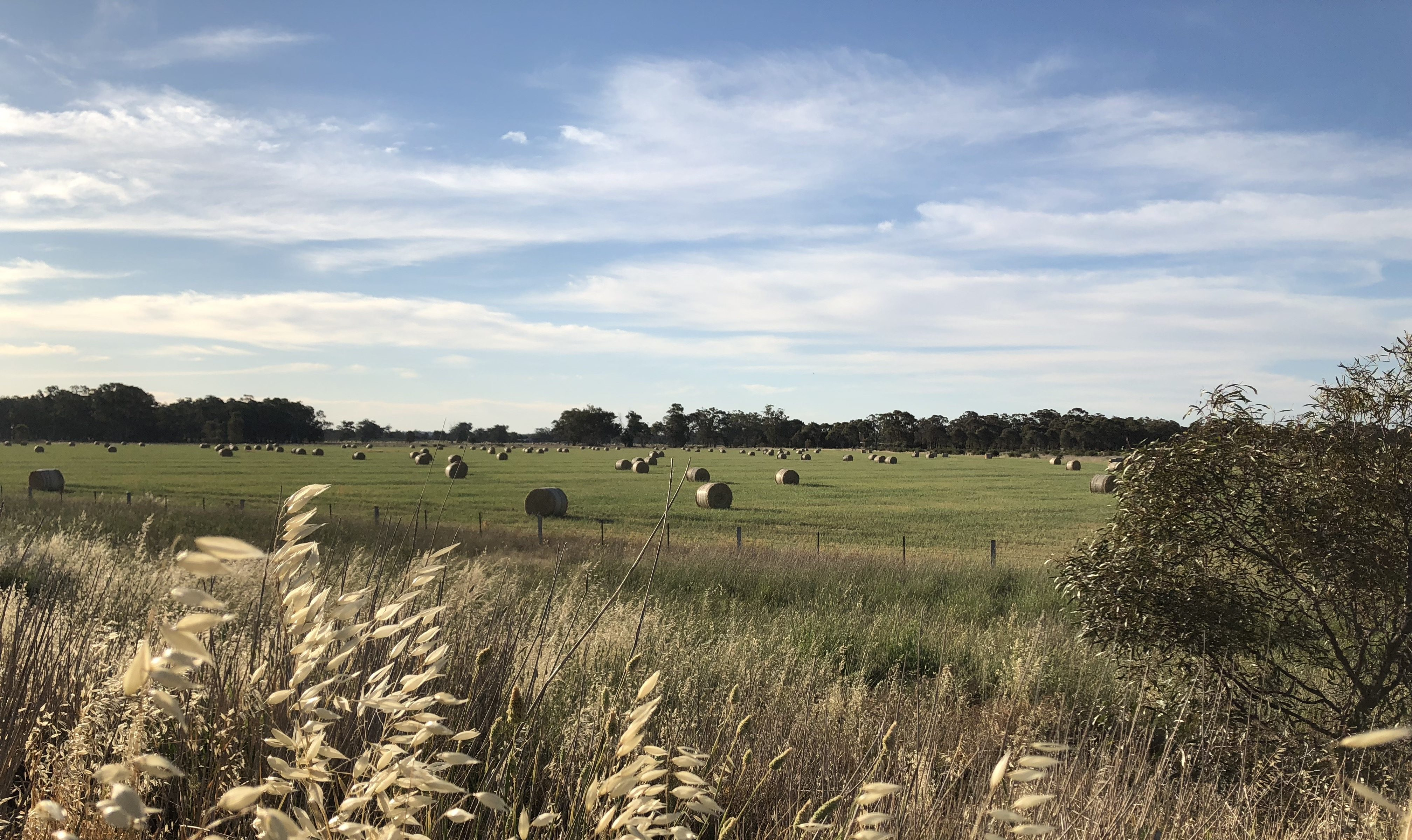 blue-skies-green-field-hay-bales